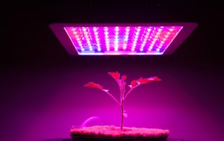 LED-lights-for-agriculture
