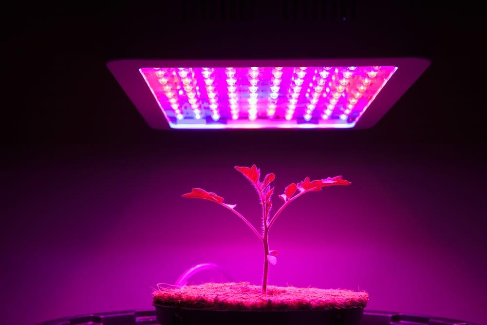 LED-lights-for-agriculture